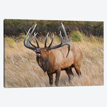 His Majesty Canvas Print #BWF161} by Brian Wolf Canvas Art Print