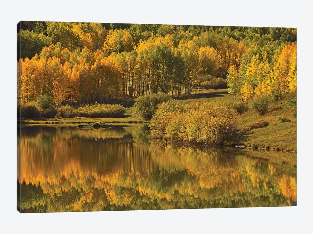 Aspen Reflections by Brian Wolf 1-piece Canvas Art Print