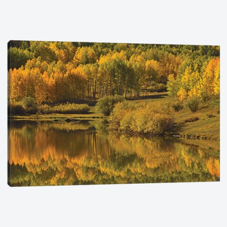 Aspen Reflections Canvas Print #BWF16} by Brian Wolf Canvas Print