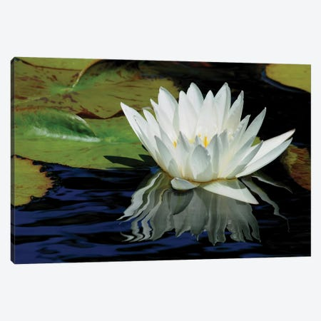 Lily Reflections Canvas Print #BWF184} by Brian Wolf Canvas Art