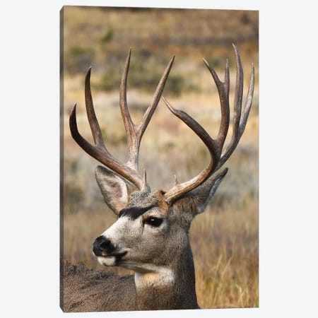 Monster Mulie Canvas Print #BWF203} by Brian Wolf Canvas Artwork