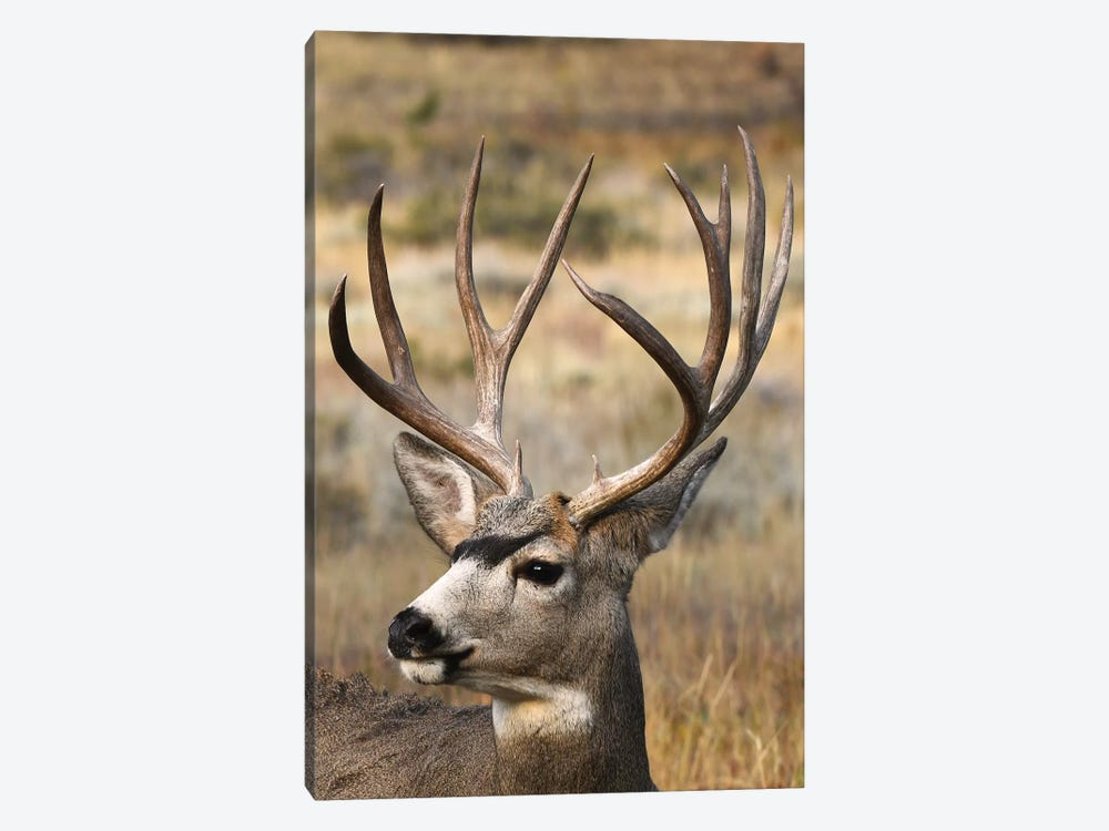 Monster Mulie by Brian Wolf 1-piece Canvas Print