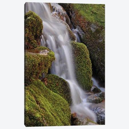 Mossy Waterfall Canvas Print #BWF215} by Brian Wolf Canvas Art