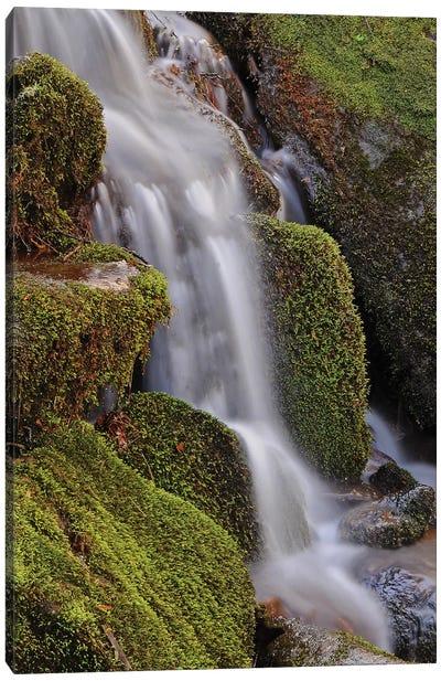 Mossy Waterfall Canvas Art Print