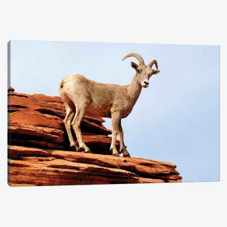 Out On A Ledge 3-Piece Canvas #BWF235} by Brian Wolf Canvas Artwork
