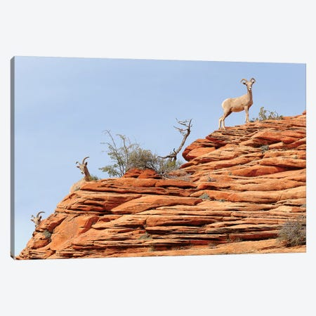 Peek A Boo Canvas Print #BWF242} by Brian Wolf Canvas Art