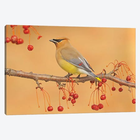 Picking Berries Canvas Print #BWF245} by Brian Wolf Canvas Art Print