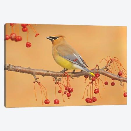 Picking Berries Canvas Print #BWF245} by Brian Wolf Canvas Art Print