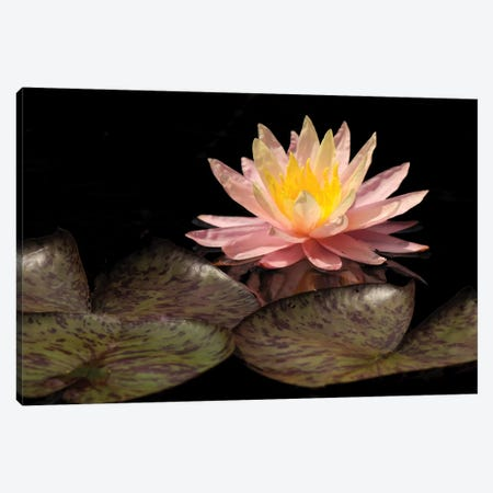 Pink Lily Canvas Print #BWF248} by Brian Wolf Canvas Wall Art