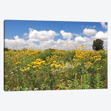 Prairie Flowers Canvas Print #BWF250} by Brian Wolf Canvas Print