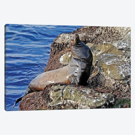 Sea Lion Canvas Print #BWF277} by Brian Wolf Canvas Artwork