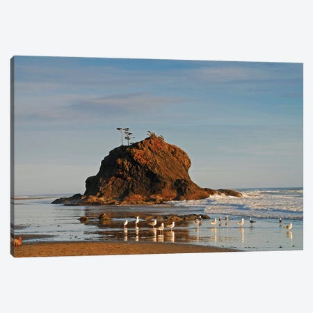 Sea Stack and Gulls Canvas Print #BWF278} by Brian Wolf Canvas Art Print