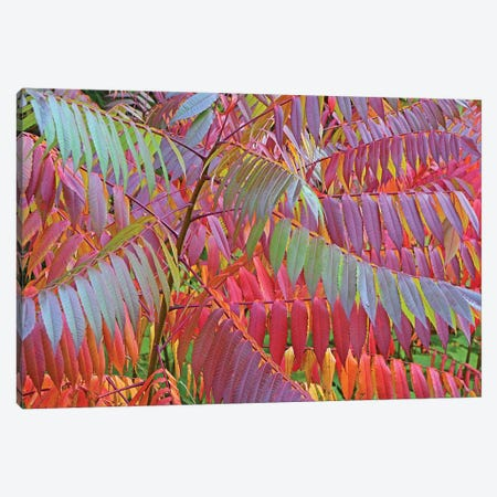 Shades of Sumac Canvas Print #BWF280} by Brian Wolf Canvas Wall Art