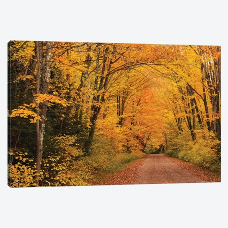Shady Lane Canvas Print #BWF281} by Brian Wolf Canvas Artwork