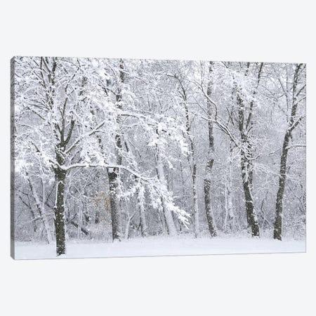 Snowstorm Canvas Print #BWF293} by Brian Wolf Art Print