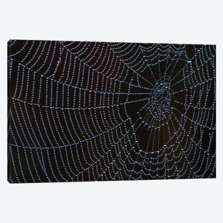 Spider's Web With Morning Dew Canvas Print #BWF300} by Brian Wolf Art Print