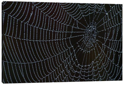 Spider's Web With Morning Dew Canvas Art Print