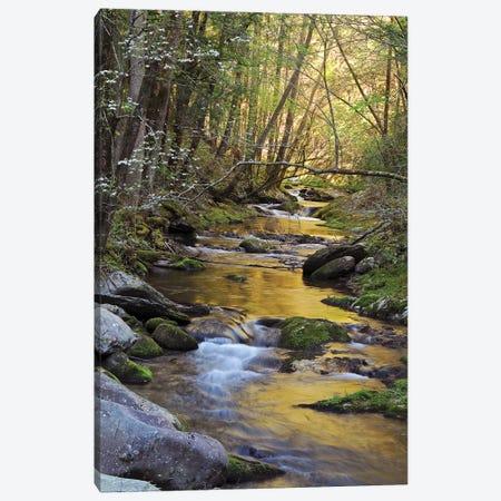 Springtime Creek Canvas Print #BWF304} by Brian Wolf Canvas Artwork