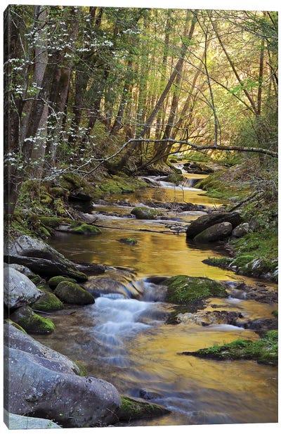 Springtime Creek Canvas Art Print