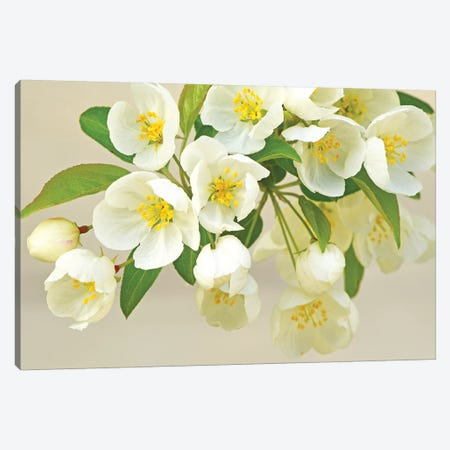 Springtime Fresh Canvas Print #BWF305} by Brian Wolf Canvas Art