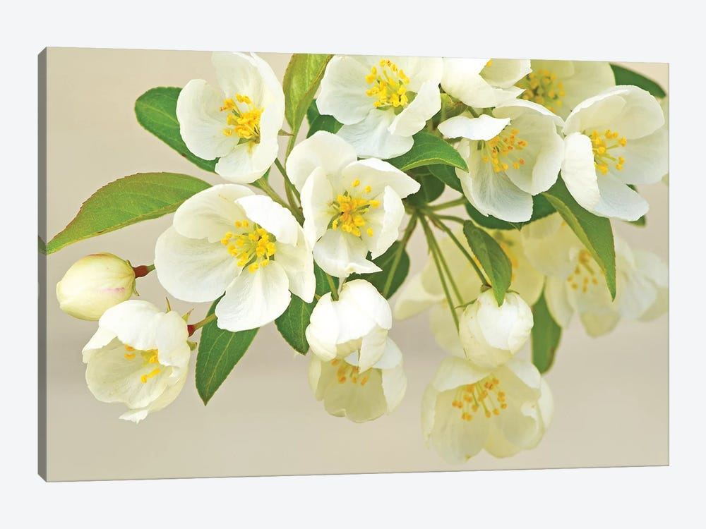 Springtime Fresh by Brian Wolf 1-piece Canvas Wall Art