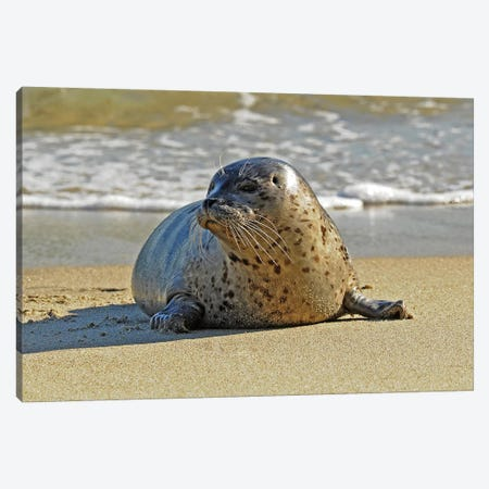 Stepping Out Of The Water Canvas Print #BWF311} by Brian Wolf Canvas Art