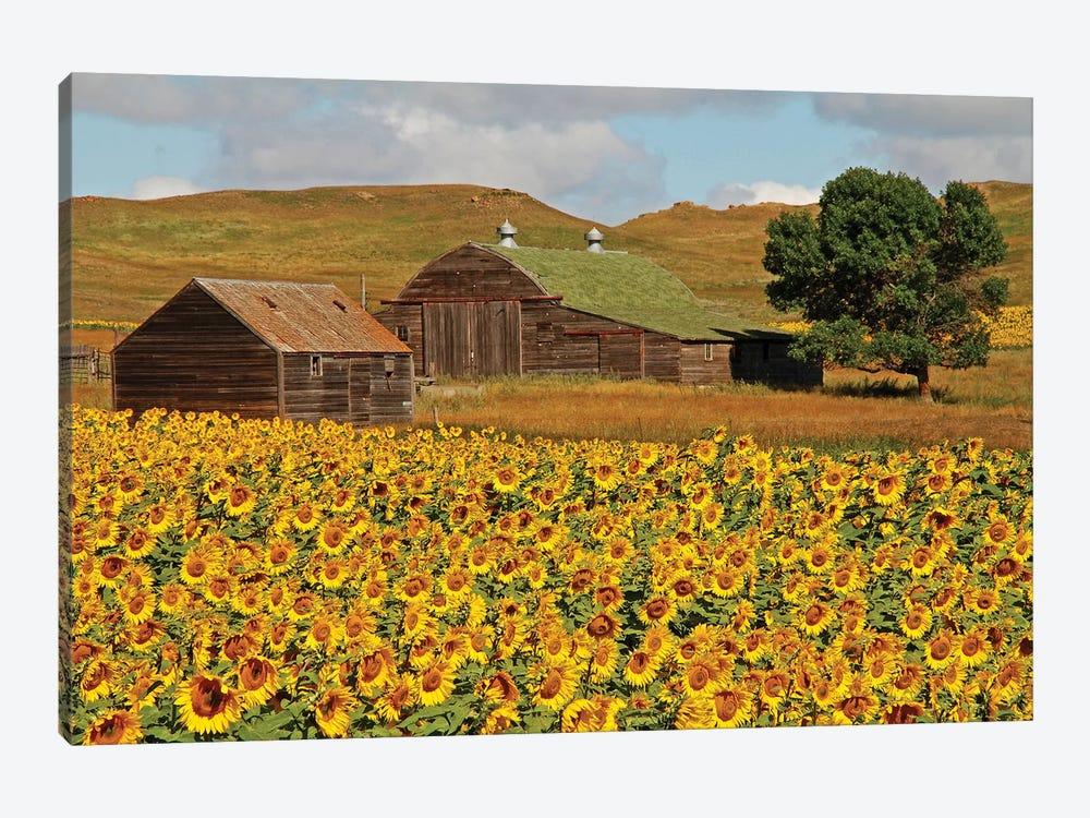 Sunflower Field by Brian Wolf 1-piece Canvas Art Print
