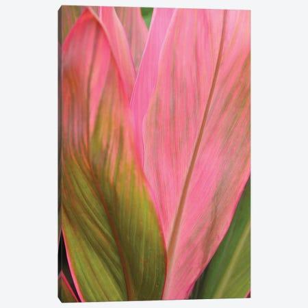 Ti Plant Canvas Print #BWF347} by Brian Wolf Canvas Artwork