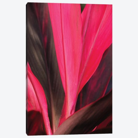 Tropical Ti Canvas Print #BWF353} by Brian Wolf Canvas Wall Art