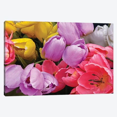 Tulip Bouquet Canvas Print #BWF355} by Brian Wolf Art Print