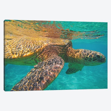 Under The Surface Canvas Print #BWF360} by Brian Wolf Art Print