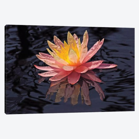 Water Lily Reflection Canvas Print #BWF364} by Brian Wolf Canvas Wall Art