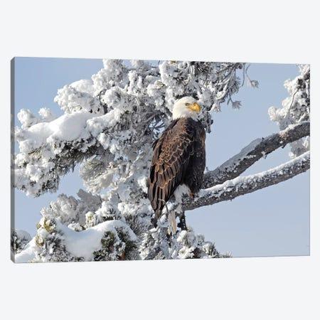 Winter Eagle Canvas Print #BWF376} by Brian Wolf Art Print