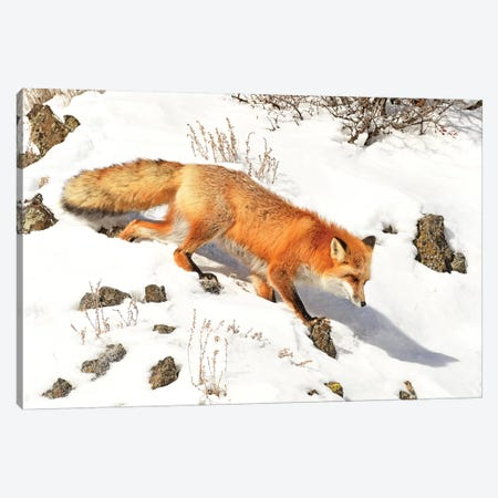 Winter Fox Canvas Print #BWF377} by Brian Wolf Canvas Print