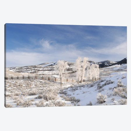 Winter In Lamar Valley Canvas Print #BWF378} by Brian Wolf Canvas Wall Art