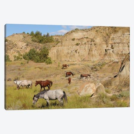 Badlands Herd Canvas Print #BWF37} by Brian Wolf Art Print