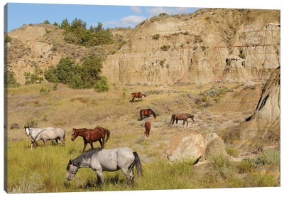 Badlands Herd Canvas Art Print