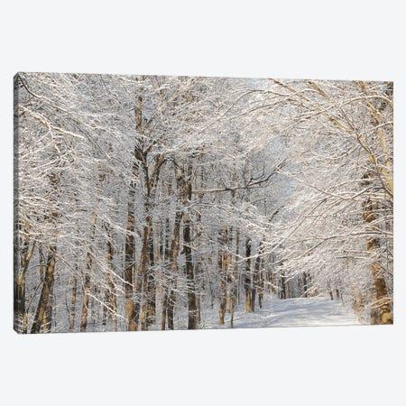 Winter Trail 3-Piece Canvas #BWF382} by Brian Wolf Canvas Print