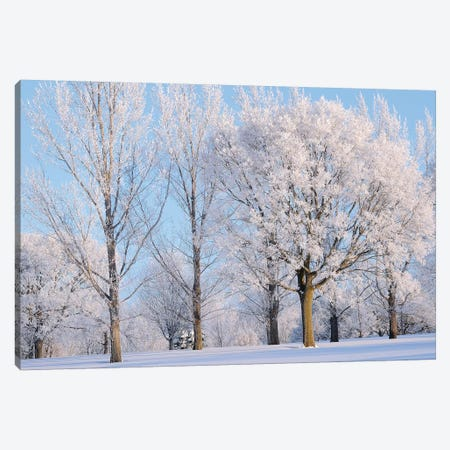 Winter Trees 3-Piece Canvas #BWF383} by Brian Wolf Canvas Print
