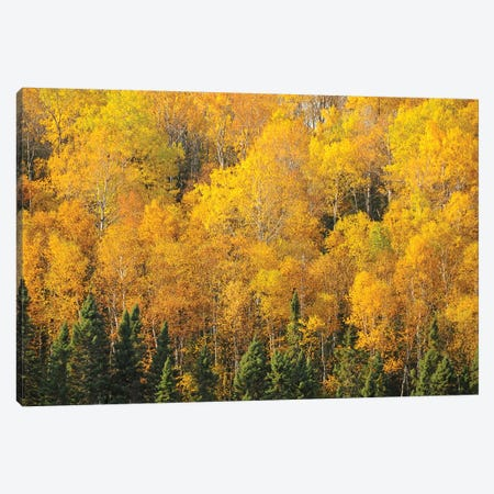 Yellows of the Gunflint Trail Canvas Print #BWF389} by Brian Wolf Canvas Art Print