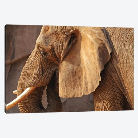 African Elephant Canvas Print #BWF3} by Brian Wolf Canvas Art Print