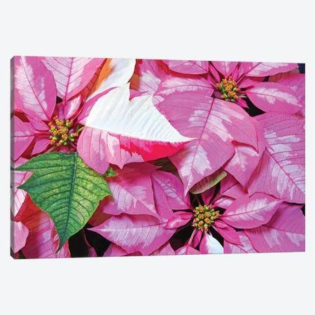 Holiday Cheer Canvas Print #BWF402} by Brian Wolf Canvas Art
