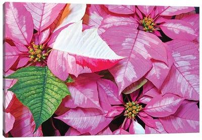 Holiday Cheer Canvas Art Print