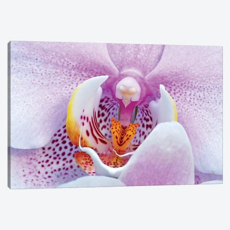 Orchid Canvas Print #BWF403} by Brian Wolf Canvas Artwork