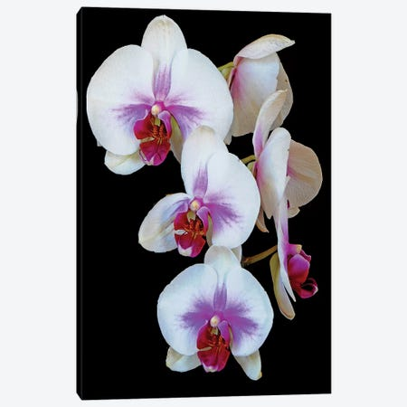 Orchids 3-Piece Canvas #BWF404} by Brian Wolf Canvas Art Print