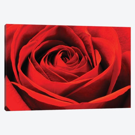 Red Rose Canvas Print #BWF407} by Brian Wolf Canvas Art Print