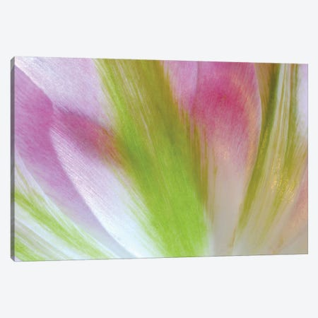 Tulip Colors Canvas Print #BWF411} by Brian Wolf Canvas Art Print