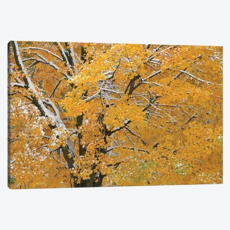 Autumn Snow Canvas Print #BWF413} by Brian Wolf Canvas Art Print