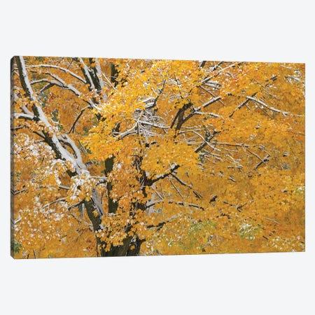 Autumn Snow Canvas Print #BWF413} by Brian Wolf Canvas Art Print