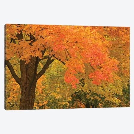 Autumn Splendor Canvas Print #BWF414} by Brian Wolf Canvas Artwork